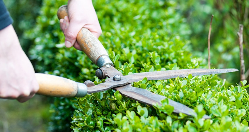 Lawn and Garden Care Las Vegas. Pro Green Land Landscaping.