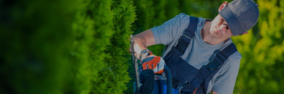 Las Vegas Landscaping And 