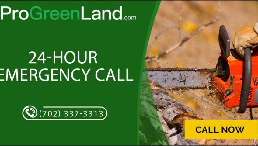 24-hour-emergency-tree-services