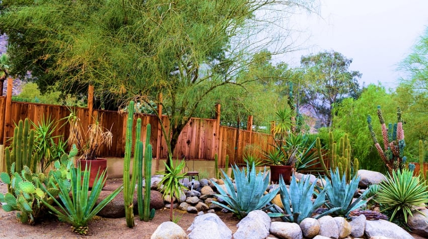 Desert Landscaping & Xeriscapes