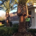 Green American Tree & Landscaping