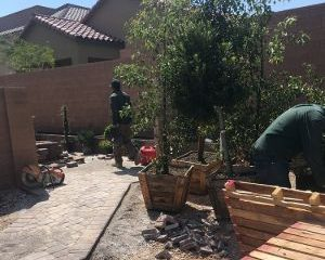 Tree Removal & Planting