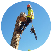 Affordable Tree Services Las Vegas by Green America Tree & Landscaping